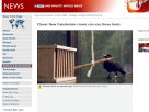 Clever New Caledonian crows can use three tools.