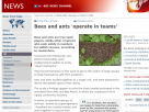 Bees and ants 'operate in teams'.