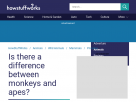 Is there a difference between monkeys and apes?