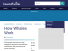 How whales work.