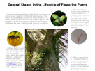 General stages in the life cycle of flowering plants.