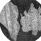 Robert Hooke's drawing of a cork
