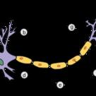 Neurone (blank)
