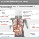 Hormones involved in hunger