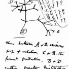 Darwin's first evolutionary tree