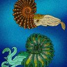 Reconstruction of an ammonite
