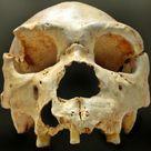 <i>Homo heidelbergensis</i>