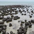 Alive stromatolites in Shark Bay, Australia