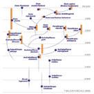 Phylogenetic tree of Hominines (III)