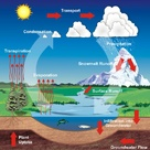 Diagram of the water cycle (II)