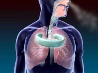 Respiratory system (I)