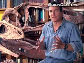 Dinosaur bird bones